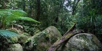 Daintree_National_Park
