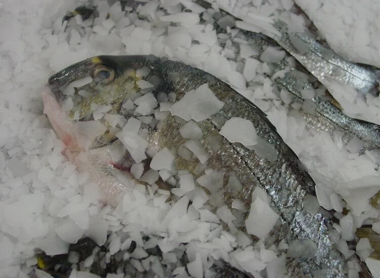 Serpihan Es Ikan Laut dan Tawar