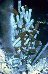 Black smoker---deep sea vent gushing materials for life to use
