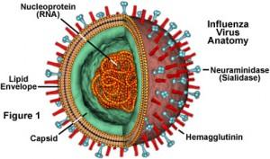 influenzafigure1