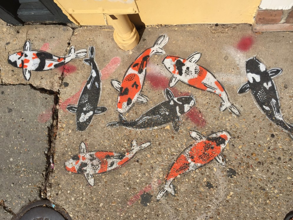Koi Koi on the pavement