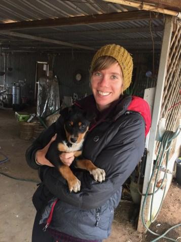 Lynn, an 8 week old sheep dog in training