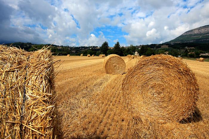 Campo di grano in Provenza, 2010