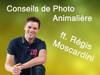 Permalink to: Conseils de Photo Animalière – ft. Régis Moscardini