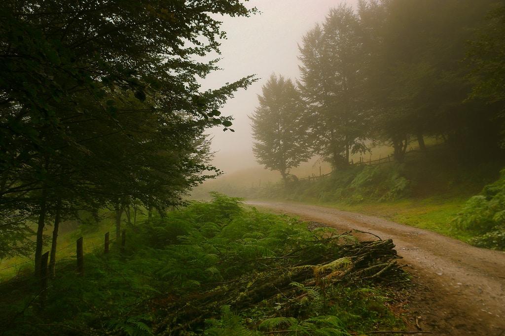 Bosque de Peloño