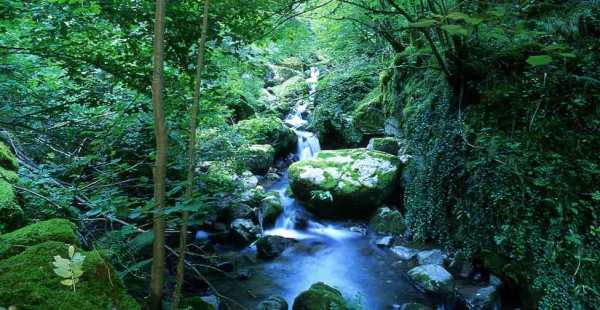 Paisajes-de-Ponga_Asturias_Axtur_025