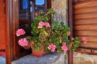 Flores del Rincón del Sol.Casa Rural Asturias