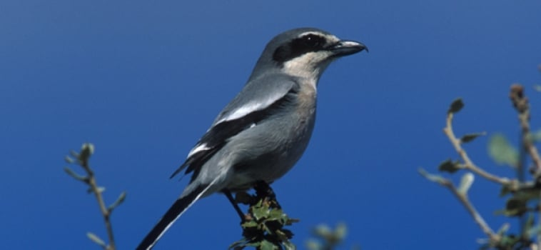 Bird watching en Asturias