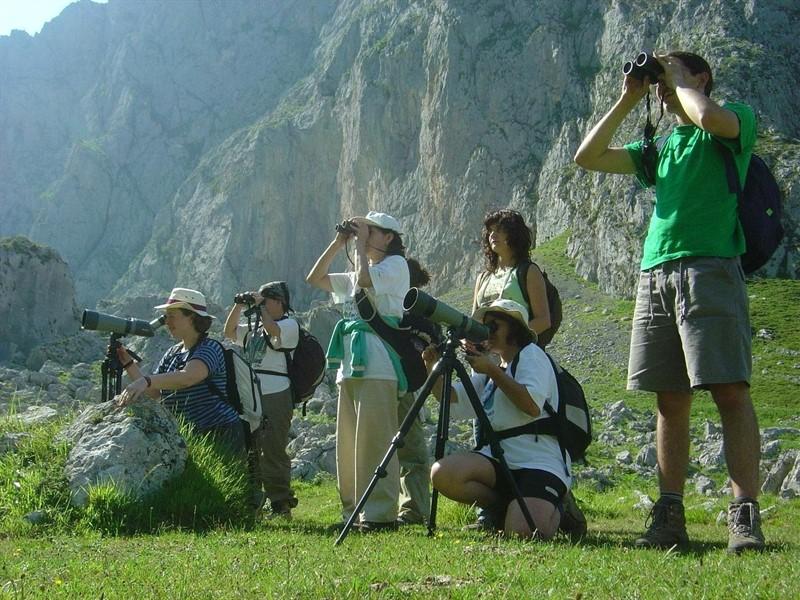 avistamiento de aves en los Picos de Europa