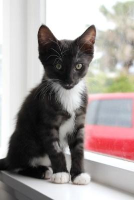turbo cat cats kitten kittens spca
