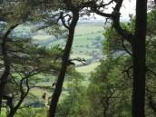 024View through trees (640x480)