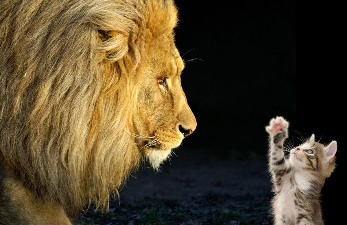 Luchad e Gigantes (Gato vs León)