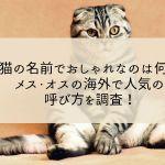 猫の名前でおしゃれなのは何?メス・オスの海外で人気の呼び方を調査!
