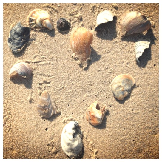 Shells collected on the Assateague Beach