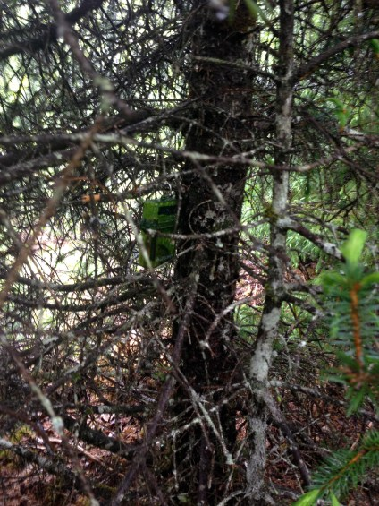 Can you spot the Cache hanging in the tree?