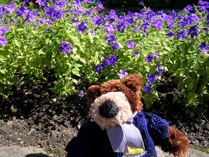 Teddy in the flower garden