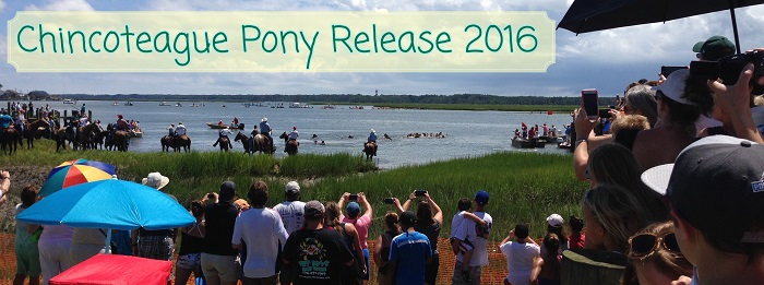 Chincoteague Pony Release Swim 2016: Learning to Take Chances