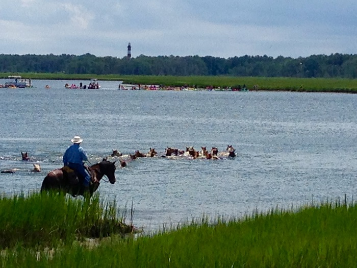 Chincoteague Pony Penning 2016 Video