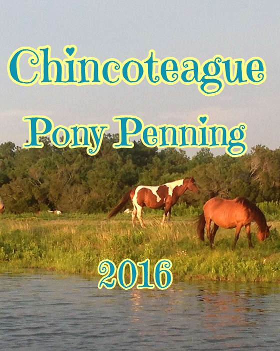 Chincoteague Pony Penning
