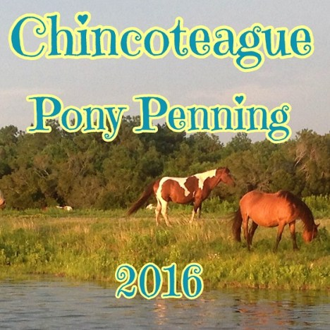 Chincoteague Pony Swim 2016