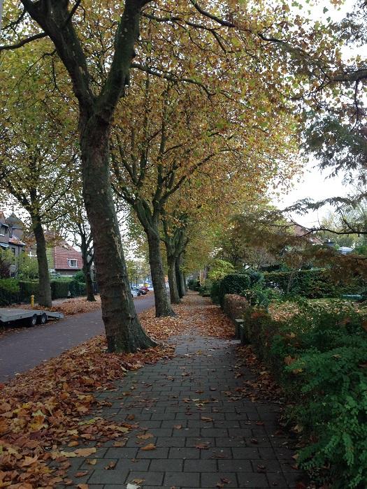 New Delft
