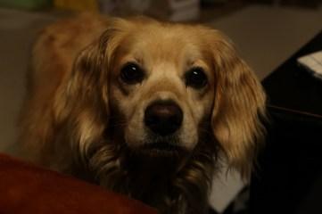 Falkor, a dog