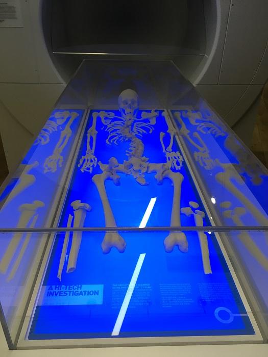 Richard III 3D printed copy of skeleton