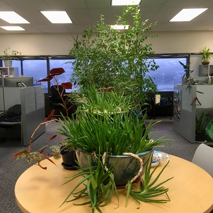 New Office Plants