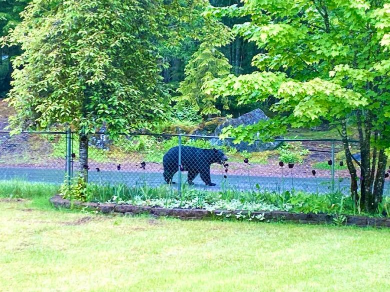 Neighborhood Bear