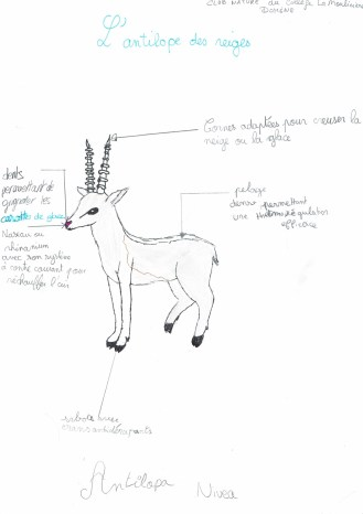 antilope-des-neiges-concours-asuma