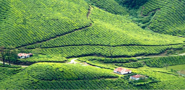 devikulam-hill-station-kerala
