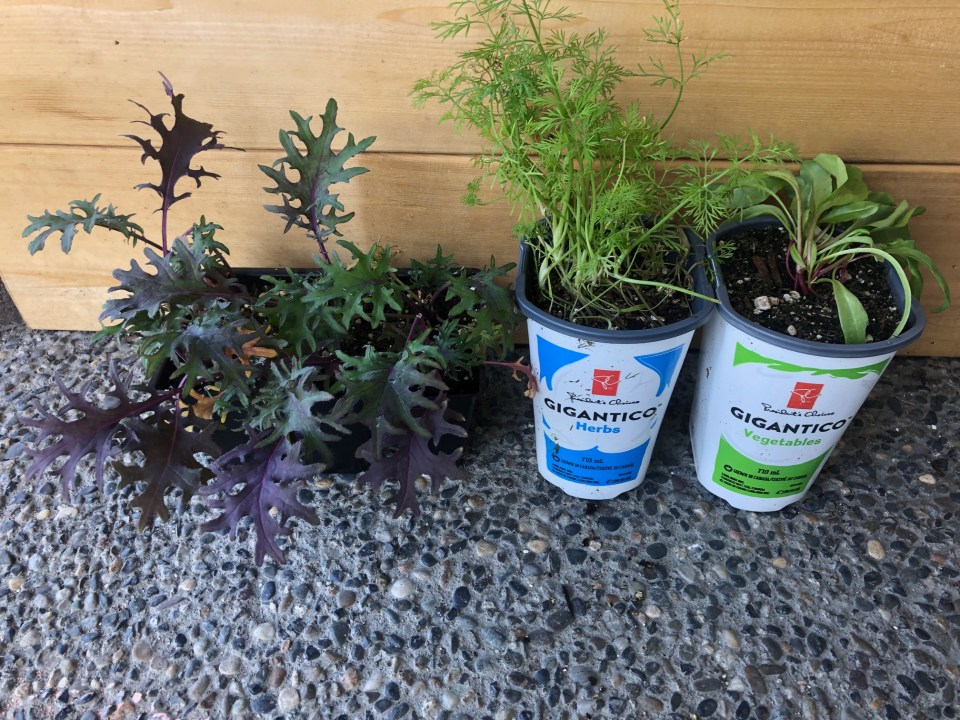 Row of herbs and vegetable plants in pots