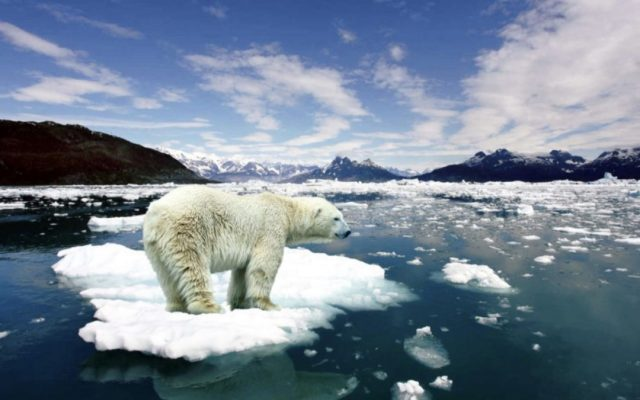ذوبان الجليد وتأثيره على الحياة البرية