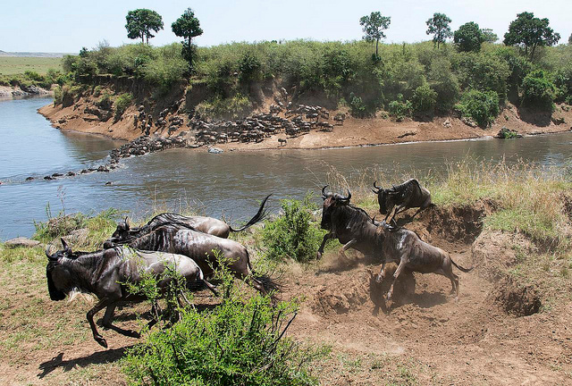 Serengeti Great migration Maasai Mara