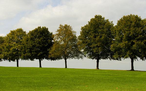 barisan-pohon
