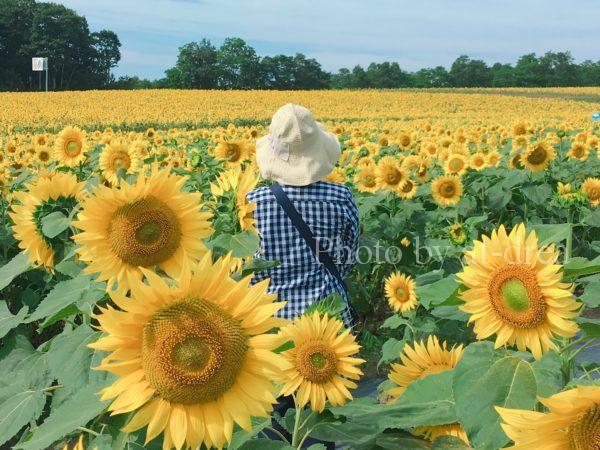 滋賀から北海道家族旅行 ひまわりの里