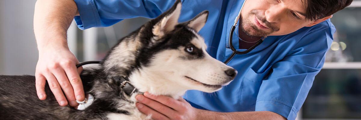 dicas de como montar seu pet shop- funcionarios