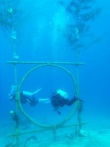 茅の輪ダイビング