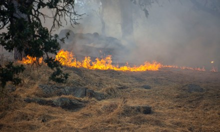 10 Acres Burn in Brush Fire