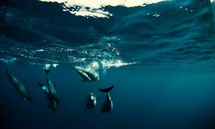 World Surf League announces We Are One Ocean Campaign