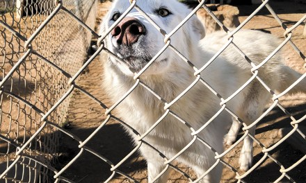 WHAR Wolf Rescue Seeks Home for Wolf Hybrid Puppies
