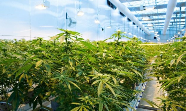 The Great Cannabis Debate; Part One
