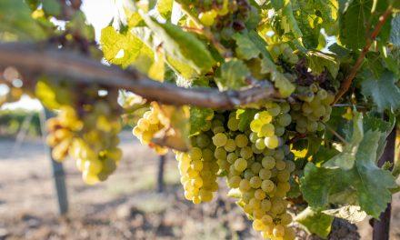 The 2021 San Luis Obispo County Wine Industry Awards