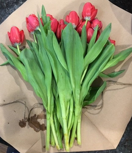 Red tulips laying on a counter