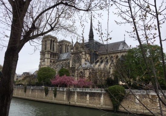 Notre-Dame-Cherry-Blossoms-2019.jpg