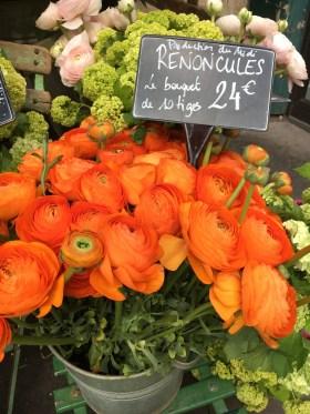 Pot of orange flowers