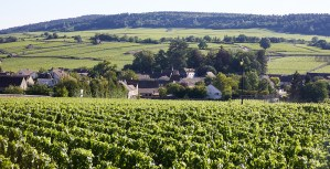 Wine country of Burgundy France.