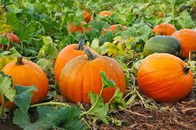 pumpkin 22.jpg