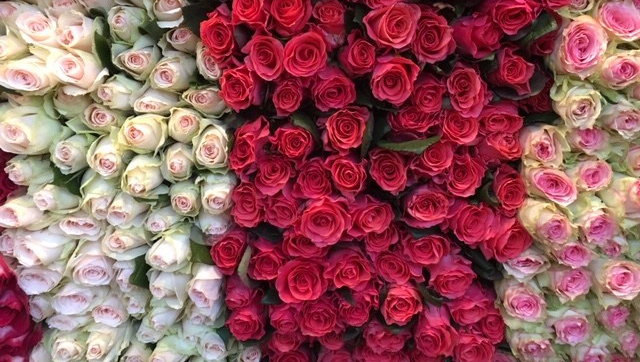 assorted roses piled high