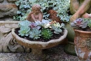 Birdbath filled with succulents.